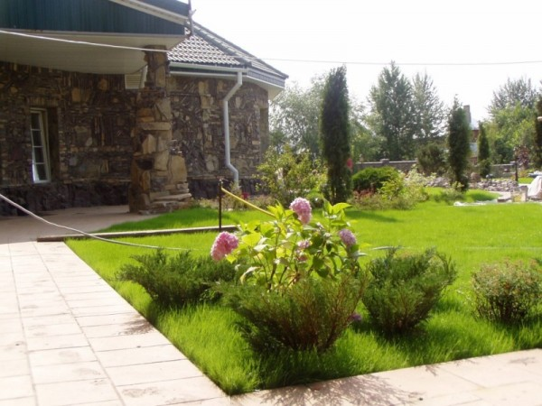 In landscape design conifers diluted deciduous shrubs