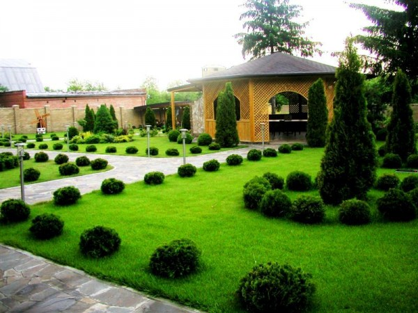 A lovely green lawn and shrubs