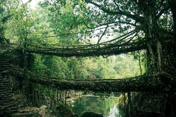 Bridge made of branches in India
